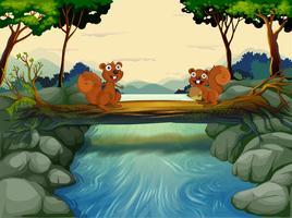 Twee eekhoorns bij de rivier
