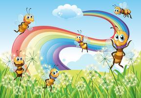 Bijen op de heuveltop en een regenboog in de lucht