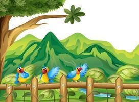 Drie kleurrijke papegaaien