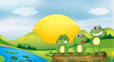 Drie kikkers bij de rivieroever