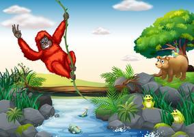 Orangoetan en rivier