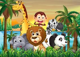 Een groep dieren aan de oever met kokospalmen