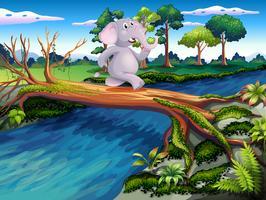 Een olifant die een boombrug kruist