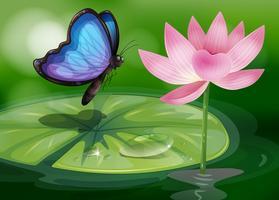 Een vlinder dichtbij de roze bloem bij de vijver