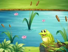 Een kikker aan de rivieroever vector