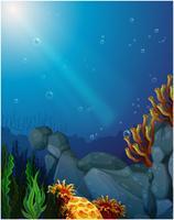 Koralen en zeewieren onder de zee