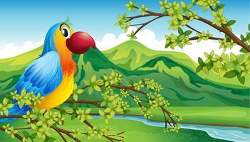 Een papegaai op een tak van een boom