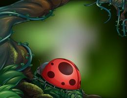 Een lieveheersbeestje