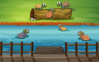 Een groep schildpadden bij de rivier