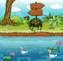 Een schildpad dichtbij de houten arrowboards bij de rivieroever