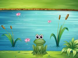 Een rivier en een kikker