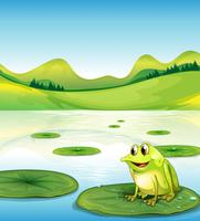 Een kikker boven het water lilly