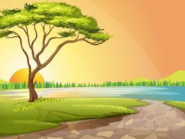 Een rivier en een boom