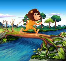 Een leeuw die loopt terwijl hij de rivier oversteekt