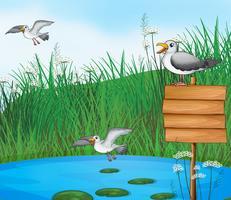Drie vogels bij de vijver met een uithangbord