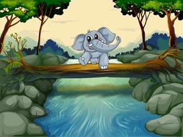 Een olifant die de rivier oversteekt