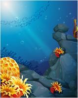 De koralen bij de rotsen en de school met vissen