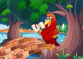 Een rode papegaai die een boek leest