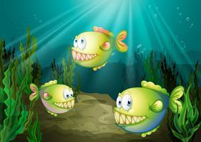 Drie piranha's onder de zee met zeewieren