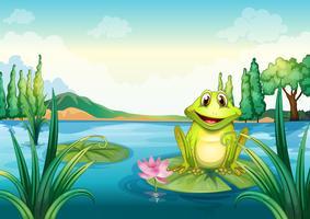 Een gelukkige kikker boven een waterlelie