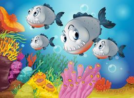 Vier grijze vissen onder de zee