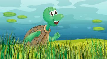 Een schildpad die langs de vijver loopt