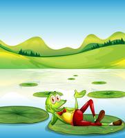 Een kikker boven de waterlelie die bij de vijver drijft