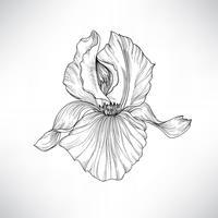 Bloem geïsoleerd. Floral gravure illustratie. Vector set.