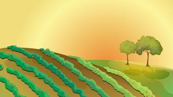 Een boerderij in de heuvels