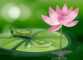 Een sprinkhaan boven een waterlelie naast een roze bloem vector