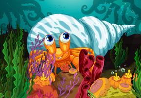 Een grote schaal dichtbij de zeewieren