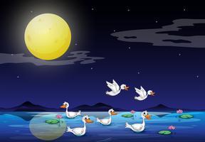 Eenden bij de vijver in een maanlichtlandschap