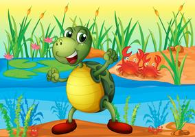 Een schildpad in de vijver met twee krabben aan de achterkant