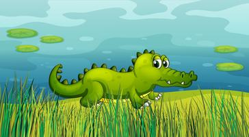 Een krokodil naast de vijver