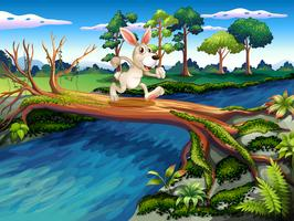 Een konijn dat de rivier overstak