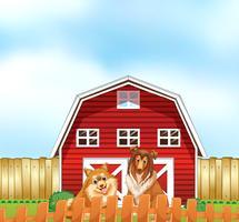 Honden en schuur