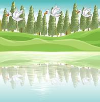 Drie eenden vliegen langs de rivier