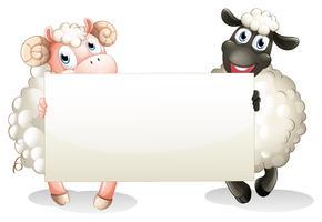Twee sheeps die een lege banner houden