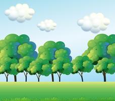 De groene bomen