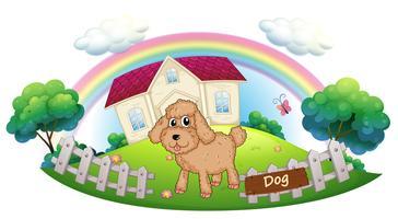 Een bruin puppy voor een huis