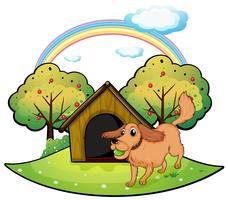 Een hond die buiten het hondehok dichtbij de appelboom speelt