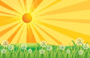 Stralen van de zon