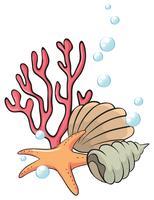 Schelpen en zeesterren onder de zee