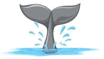 Een staart van een walvis