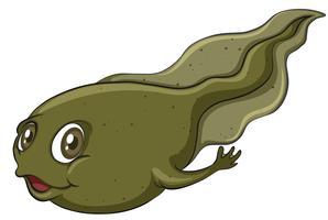 Een kikkervisje