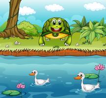 Een schildpad naast de rivier met eenden