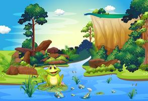 Een kikker die bij de rivier dichtbij de klip speelt