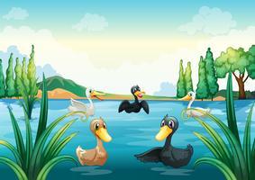 Een groep watervogels bij de vijver