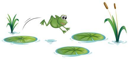 Een kikker bij de vijver met waterlelies