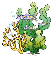Drie vissen onder de zee dichtbij de zeewieren